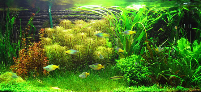 Голландский аквариумный дизайн