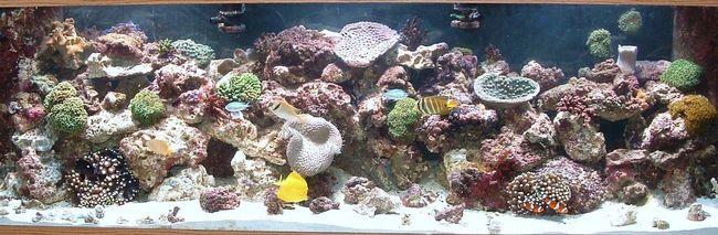 Морской аквариумный дизайн